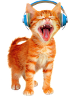 headphone-cat-thumbnail