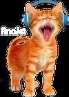 headphone-cat-thumbnail