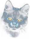 black-cat-thumbnail